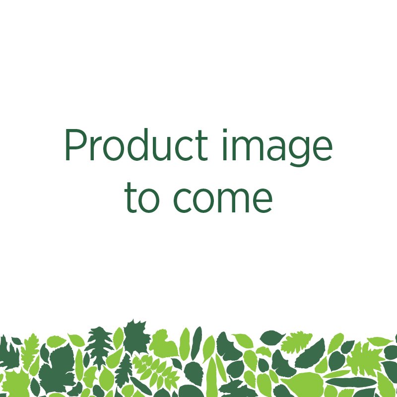 Bow Bridge Hand Painted Glass Ornament