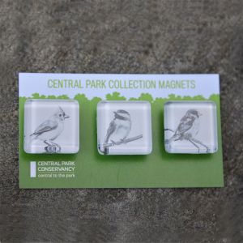 Central Park Glass Magnet Set - Birds